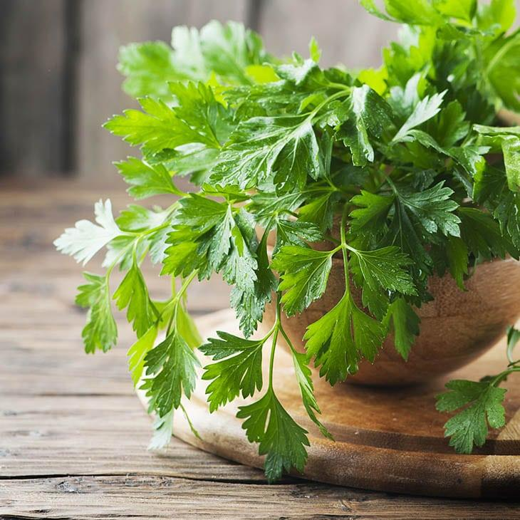 cilantro-vs-parsley