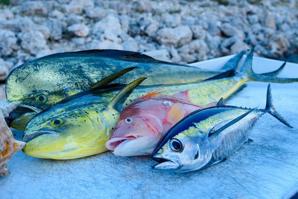 What does mahi mahi taste like what 39 s the best about it for How to cook mahi mahi fish