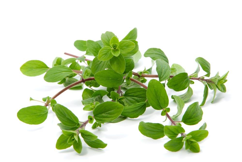 https://www.shutterstock.com/fr/image-photo/bunch-marjoram-isolated-on-white-271507376?src=byJ-YC0j8XmJcC1Sh3EGyQ-1-21